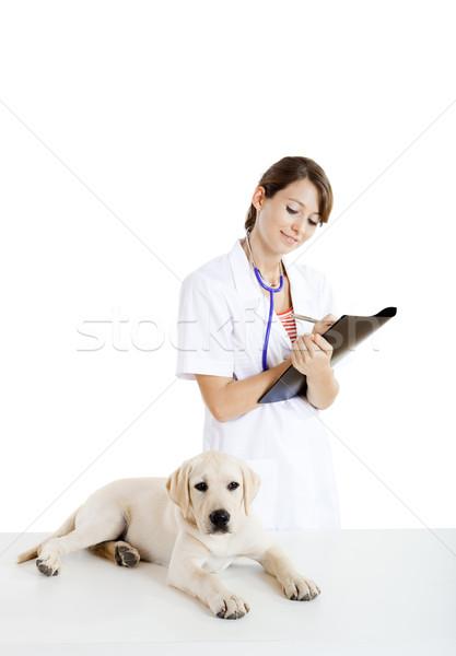 Stock fotó: Elvesz · törődés · kutya · fiatal · női · állatorvosi