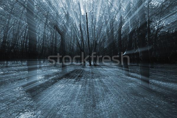 Forêt résumé paysage automne peur mouvement Photo stock © iko
