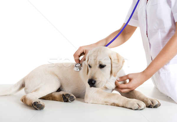 Foto stock: Toma · atención · perro · jóvenes · femenino · veterinario