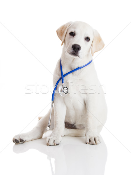 Veterinarian dog Stock photo © iko
