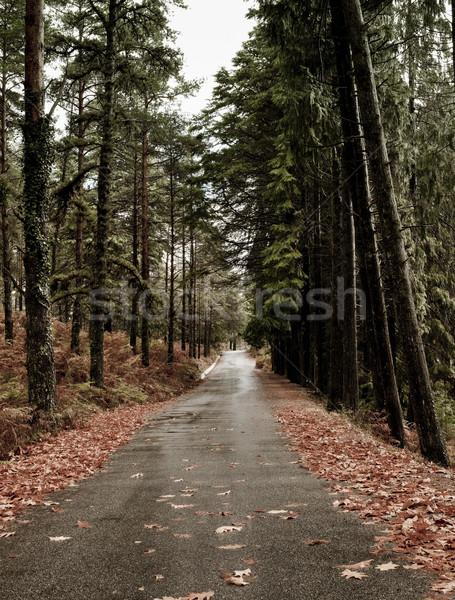 Belle route automne paysage élevé arbres Photo stock © iko
