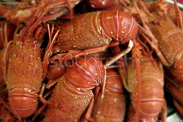 Lobsters Stock photo © iko