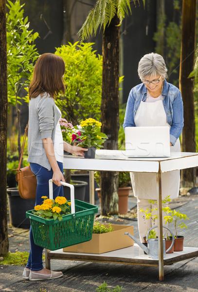 Munkás vásárló üvegház érett nők dolgozik Stock fotó © iko