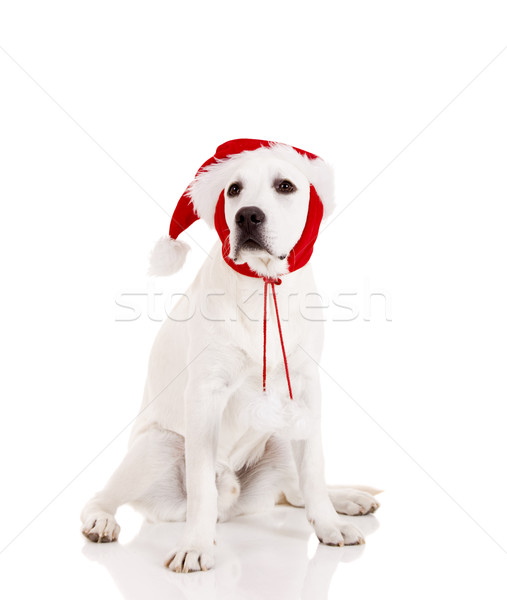 Stock photo: Christmas Dog