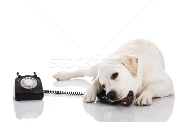Dog and phone  Stock photo © iko