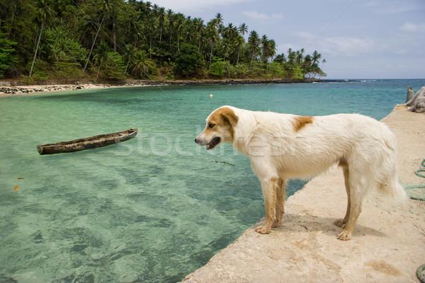 Ekvator plaj köpek iskele güzel ağaç Stok fotoğraf © iko