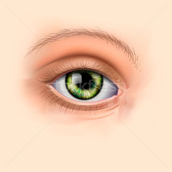 Nő zöld szem közelkép vektor eps10 Stock fotó © ikopylov
