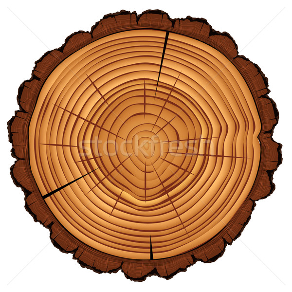 Cross section of tree stump isolated on white Stock photo © ikopylov