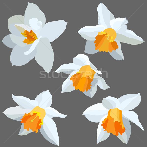 изолированный набор цветок весны лист красоту Сток-фото © iktash