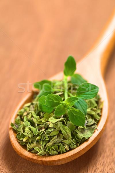 орегано сушат листьев свежие Top Сток-фото © ildi