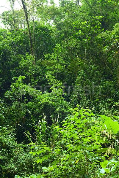 Cloud Forest in Ecuador Stock photo © ildi