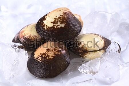 Pile of Mussels on Ice Stock photo © ildi