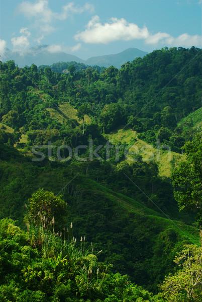 Buja domboldal Colombia trópusi növényzet északi Stock fotó © ildi