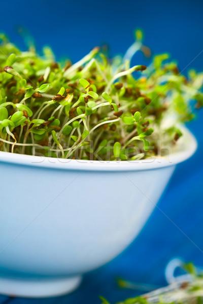 Alfalfa Sprouts Stock photo © ildi