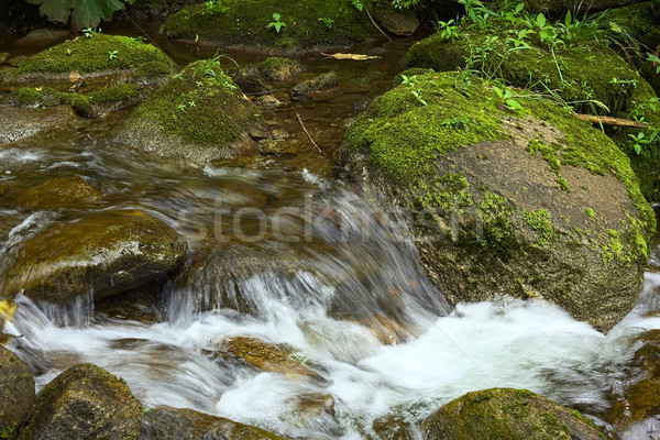 Small Brook with Moss-Covered Rocks  Stock photo © ildi