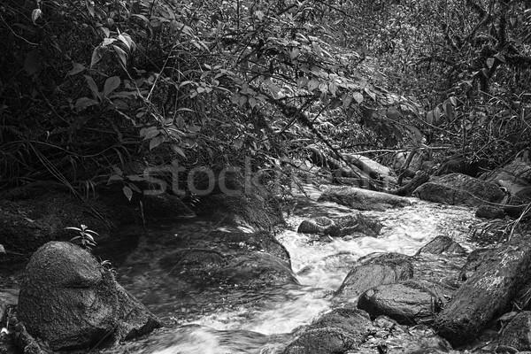 Small Brook in Black and White Stock photo © ildi