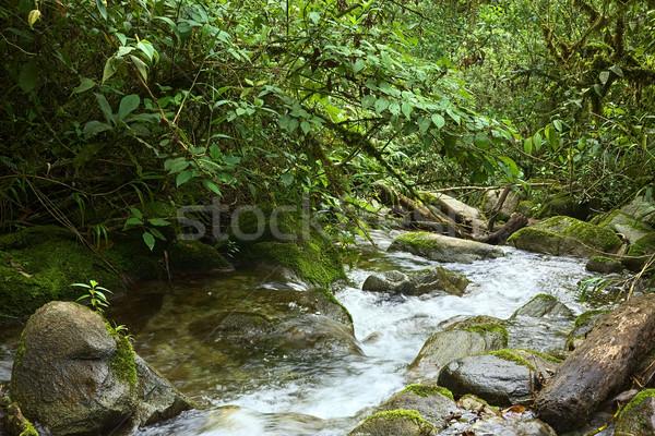 Small Brook with Rocks and Plants Stock photo © ildi