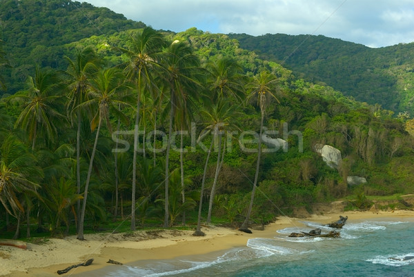 Palmtrees in Tayrona Stock photo © ildi