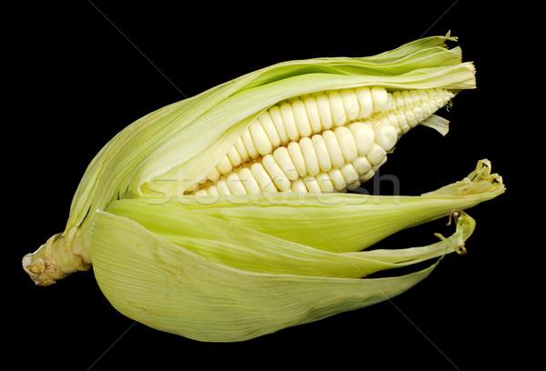 Corn Cob on Black Stock photo © ildi