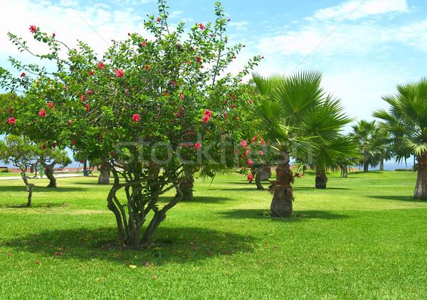 Park lima Peru ebegümeci ağaç çok Stok fotoğraf © ildi