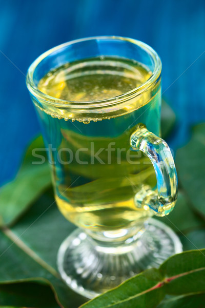 Eucalyptus Tea Stock photo © ildi