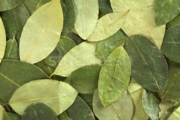 лист сушат листьев Перу пьяный чай Сток-фото © ildi