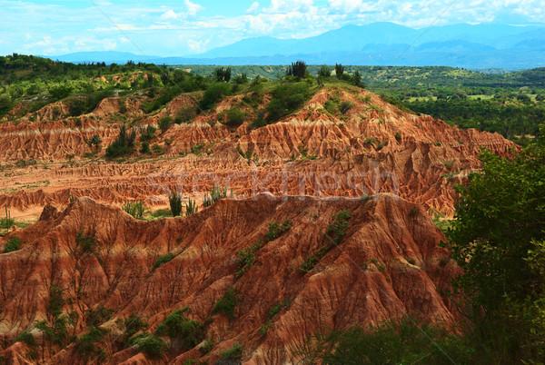 Woestijn Colombia Rood klein zuidelijk sluiten Stockfoto © ildi