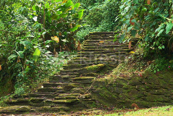Stone Stairs in Ciudad Perdida, Colombia Stock photo © ildi