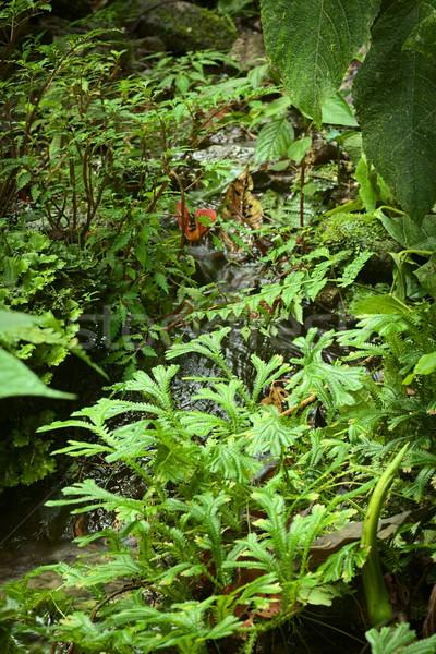 Small Brook with Plants Stock photo © ildi