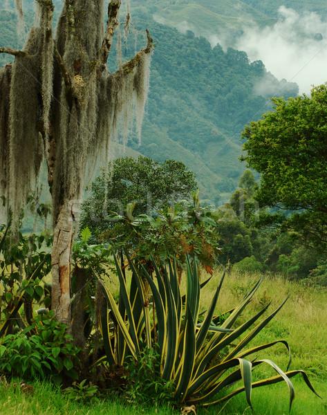 Overgrown Tree Stock photo © ildi