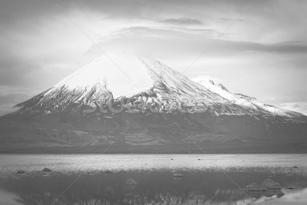 Parinacota Volcano and Chungara Lake in Northern Chile Stock photo © ildi