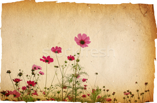 Photo stock: Vintage · papier · floral · vieux · minable · textures