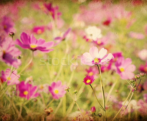 Vintage Flower Paper Background Stock Photo C Ilolab