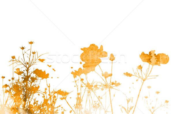 Blume abstrakten floral Stil Texturen Raum Stock foto © ilolab