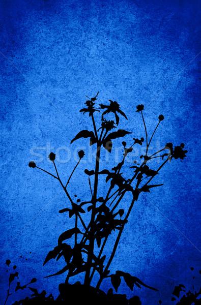 Virágmintás stílus textúrák izolált fehér űr Stock fotó © ilolab