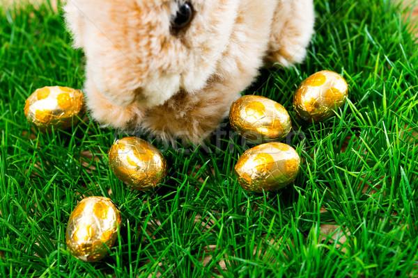 Easter rabbit on spring Stock photo © ilolab