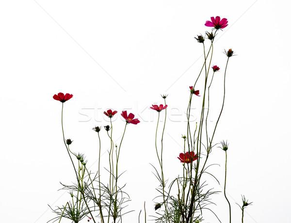 Kırmızı çiçek orman çiçekler soyut doğa Stok fotoğraf © ilolab
