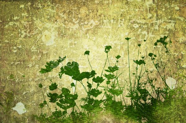 Virág absztrakt virágmintás stílus textúrák űr Stock fotó © ilolab