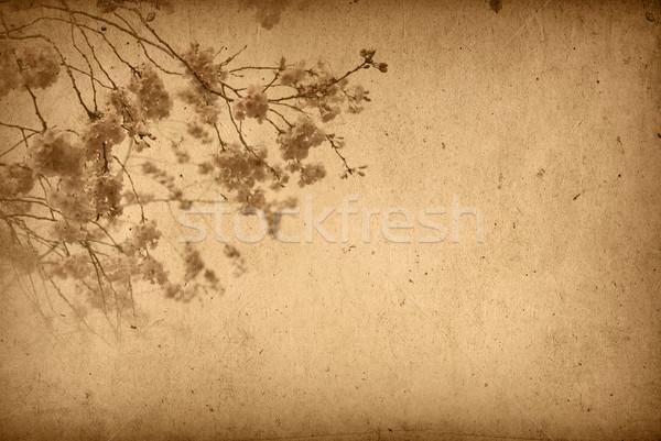 Vintage papel floral edad texturas Foto stock © ilolab