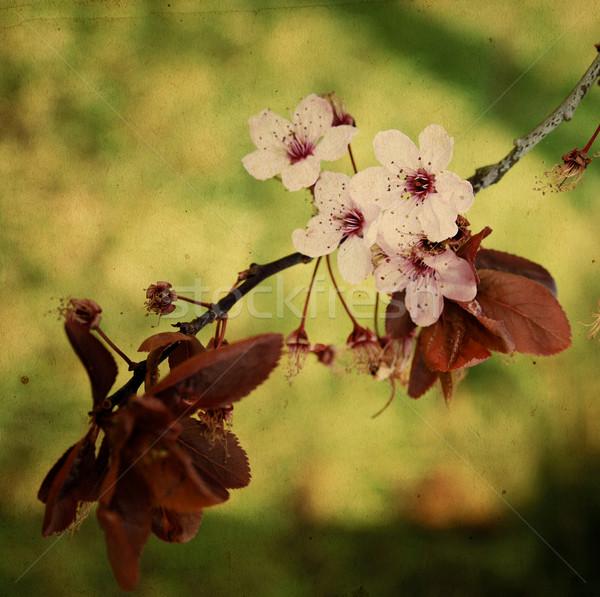 старые цветок бумаги текстуры идеальный пространстве Сток-фото © ilolab