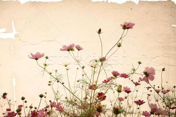 Eski çiçek kâğıt dokular mükemmel uzay Stok fotoğraf © ilolab
