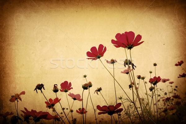 Foto stock: Velho · flor · papel · texturas · perfeito · espaço