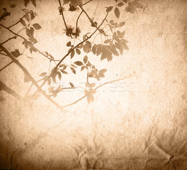 ヴィンテージ 紙 フローラル 古い みすぼらしい テクスチャ ストックフォト © ilolab