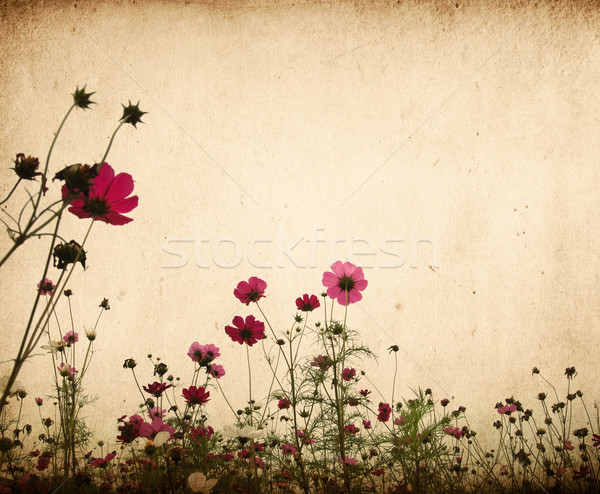 vintage flower paper background Stock photo © ilolab