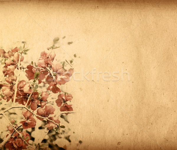 Vintage paper floral Stock photo © ilolab