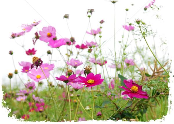 red  flowerss Stock photo © ilolab