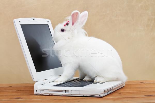 Cute bunny studies computer technology Stock photo © ilona75
