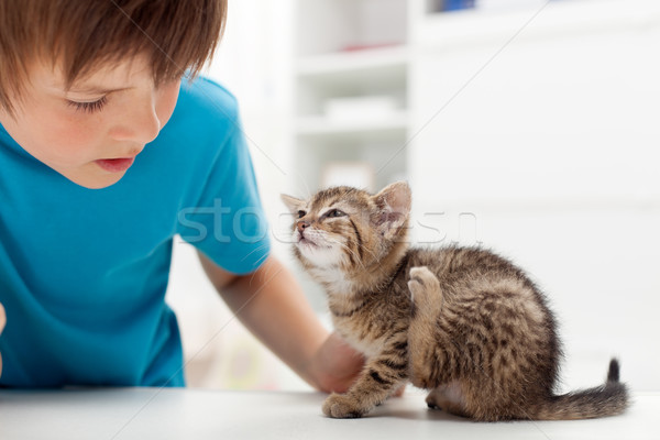 My kitten has fleas Stock photo © ilona75