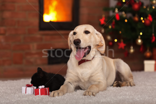 Family pets receiving gifts for Christmas Stock photo © ilona75