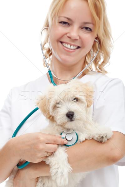 небольшой пушистый собака ветеринар ветеринарный врач Сток-фото © ilona75